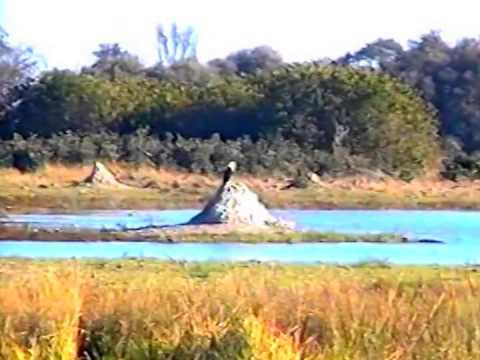Botswana - Flight from Okavango Delta to Moremi NP - 2000 - 3 of 5