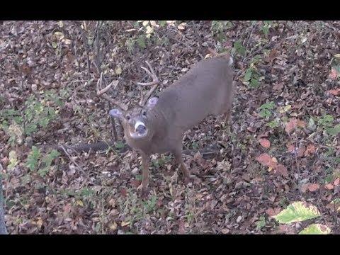 Bow Hunting Big Wisconsin Bucks