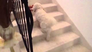 RINGO THE AMAZING DOG BORN WITHOUT EYES AND HER BUNNY