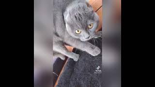 Приколы с Котами и Кошками Видео приколы с животными 2021 Смешные животные