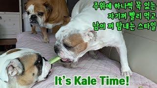 ASMR Dogs Eating Kale the Leaf…