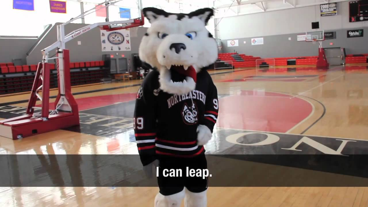super popular 51759 590a8 Q&A with Paws, Northeastern University's mascot