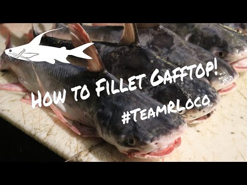 How To Fillet Gafftop (Sail Cat)