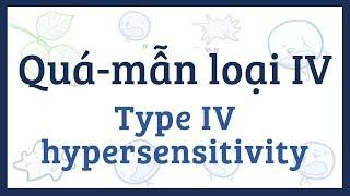 Quá-mẫn loại IV (quá-mẫn qua trung gian tế bào) - nguyên nhân, triệu chứng, điều trị và bệnh lý