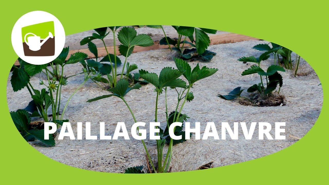 Paillis Noix De Coco votre paillage chanvre 100% naturel chez jardin et saisons