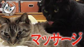 【Jean & Pont 307】猫のマッサージサロン「ポン」 元野良猫の保護里親記録  Jean & Pont, former stray cats. thumbnail