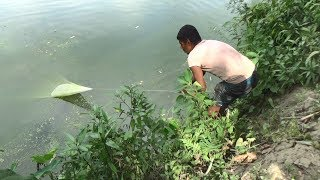 Net Fishing | Catching Fish With Cast Net | net fishing in the village (Part-28)