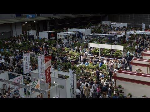 World Bonsai Convention 2017 Demonstration Highlights