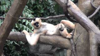 Minnesota Zoo (2014) - Music Video