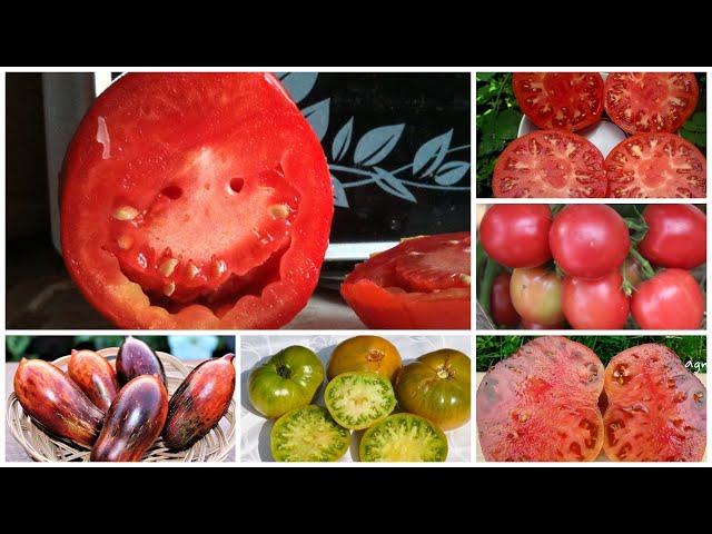 Сrazy -томаты («сумасшедшие» томаты)