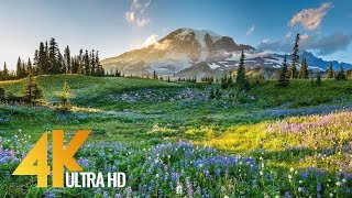 4K Mount Rainier National Park - Nature Relax Video, Summer Scenery - 2 HRS
