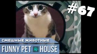 СМЕШНЫЕ ЖИВОТНЫЕ И ПИТОМЦЫ 67 ИЮНЬ 2019 Funny Pet House Смешные животные