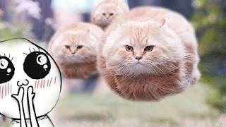 Кто такие Коты?