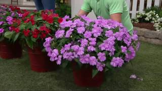 Roberta's 6-piece Big Bounce Impatiens Collection on QVC