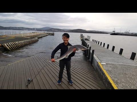 Gummy Shark Fishing In Tasmania, Australia | Caught & Released