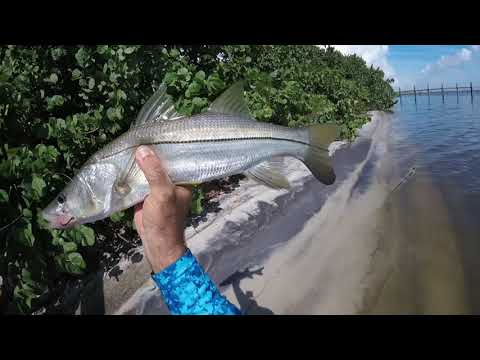 Snook Fishing Florida Docks Best Tips And Techniques