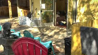 Outside Dog Yard Cam 09-19-2018 12:30:28 - 13:30:29