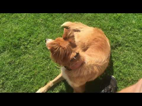 Smiley Riley's Turnaround/Best Mix Breed Dog Trainers Greenville SC/Amazing Dog Training