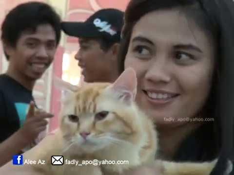 Kucing Kucing Lucu - Banjarmasin Cat Show