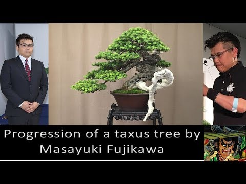 Pinus Mugo Bonsai Masahiko Kimura Demonstration At Fuji Sato Company By Massimo Bandera Youtube