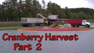 "Sights and Sounds of a Wisconsin Cranberry Harvest ""Part 2 of 2"""