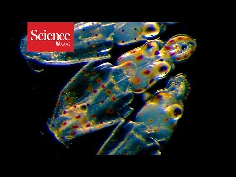 The momentous transition to multicellular life may not have been so hard after all