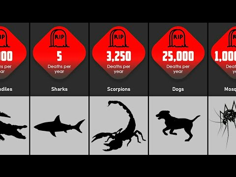 Deadliest Animals on Earth By Deaths Resulting From Animal Attacks