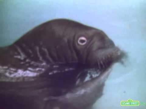 Classic Sesame Street film - Swimming walrus
