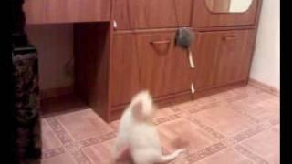 Анкор кот показывает стриптиз с мышкой