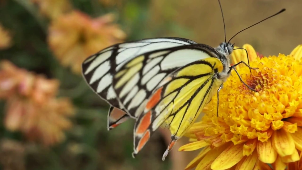 Beautiful Butterfly On Flowers Youtube