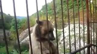 Видео про медведя медведь бедняга