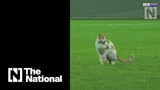 Cat sneaks on to football pitch as players break fast