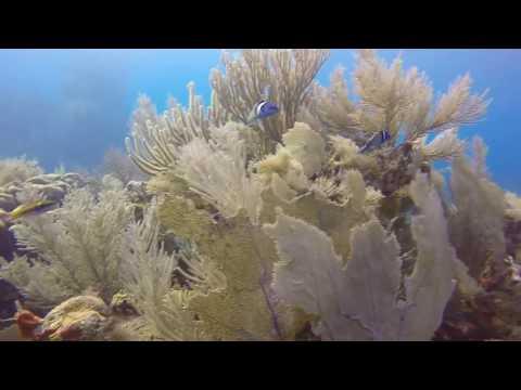 SWS customer videos | Diving with Villa on Dunbar Rock Guanaja Honduras