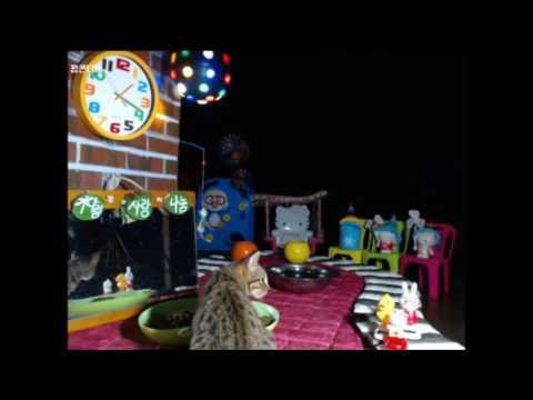 Cats Meok Bang : Stray Cats in South Korea[팝콘티비 BJ도둑고양이 나비월드] 160919 쪼왕이 오전1시15
