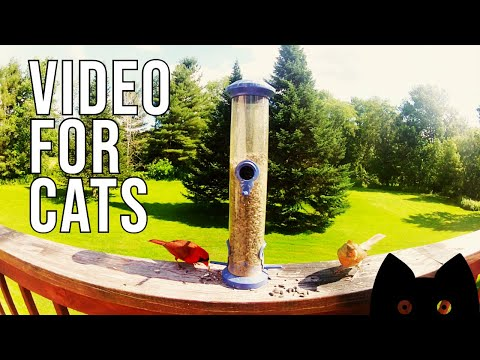 Video For Cats: Vermont Birds