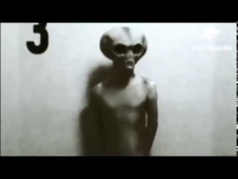 Видео: Секс Мужчины с Ослом!