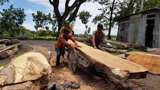Good Quality Wattle Tree Cutting to Small Sizes।Skilled Labor Cutting Wattle Tree।Dangerous Saw Mill
