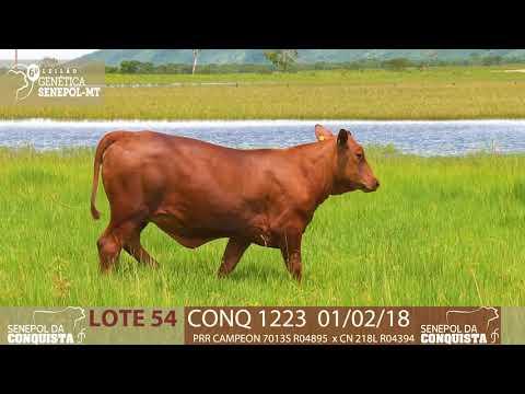 LOTE 54 CONQ 1223