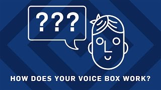 How Does Your Voicebox Work? | Brit Lab