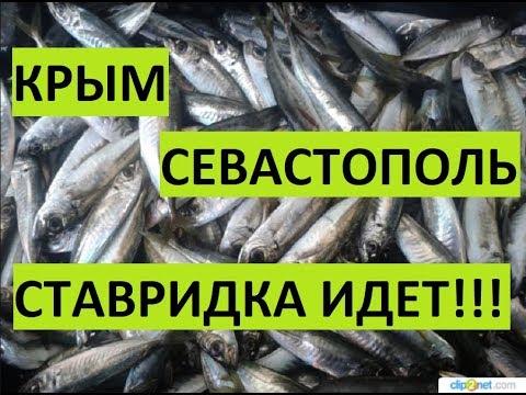 Крым. Орловка. Рыбалка.