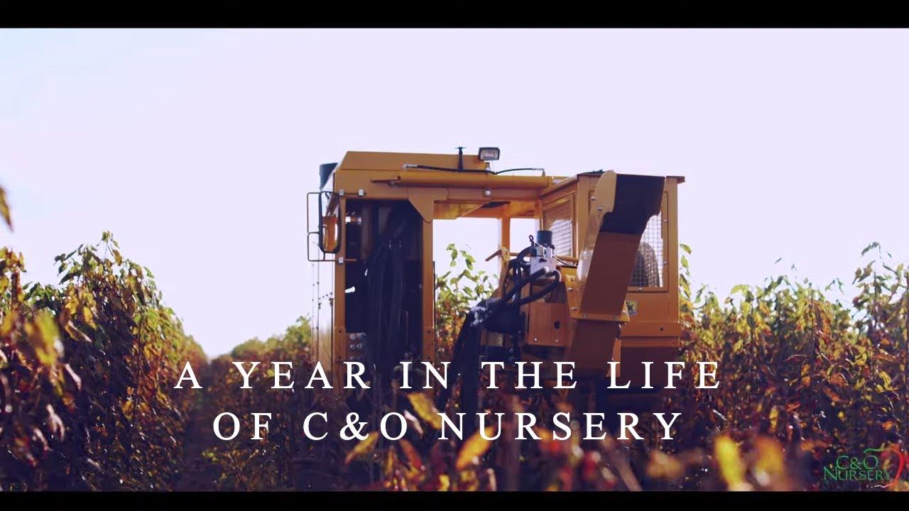 A Year In the Life of C&O Nursery | Wenatchee, WA Fruit Tree Nursery