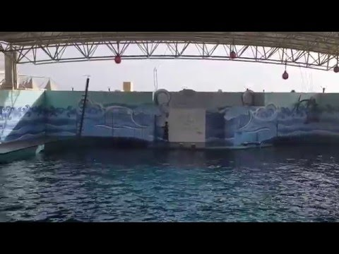 Dolphins Show - Fakieh Aquarium Jeddah