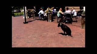 Charlotte Dog Trainer Demonstrates Advanced Off Leash Obedience