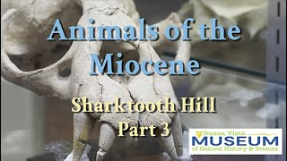 BVM Exhibits: Miocene Animals of Sharktooth Hill Part 3