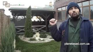видео газон рулонный