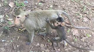 Poor Mother Feeding Cute Baby With Less Milk Daily Monkeys Man #322