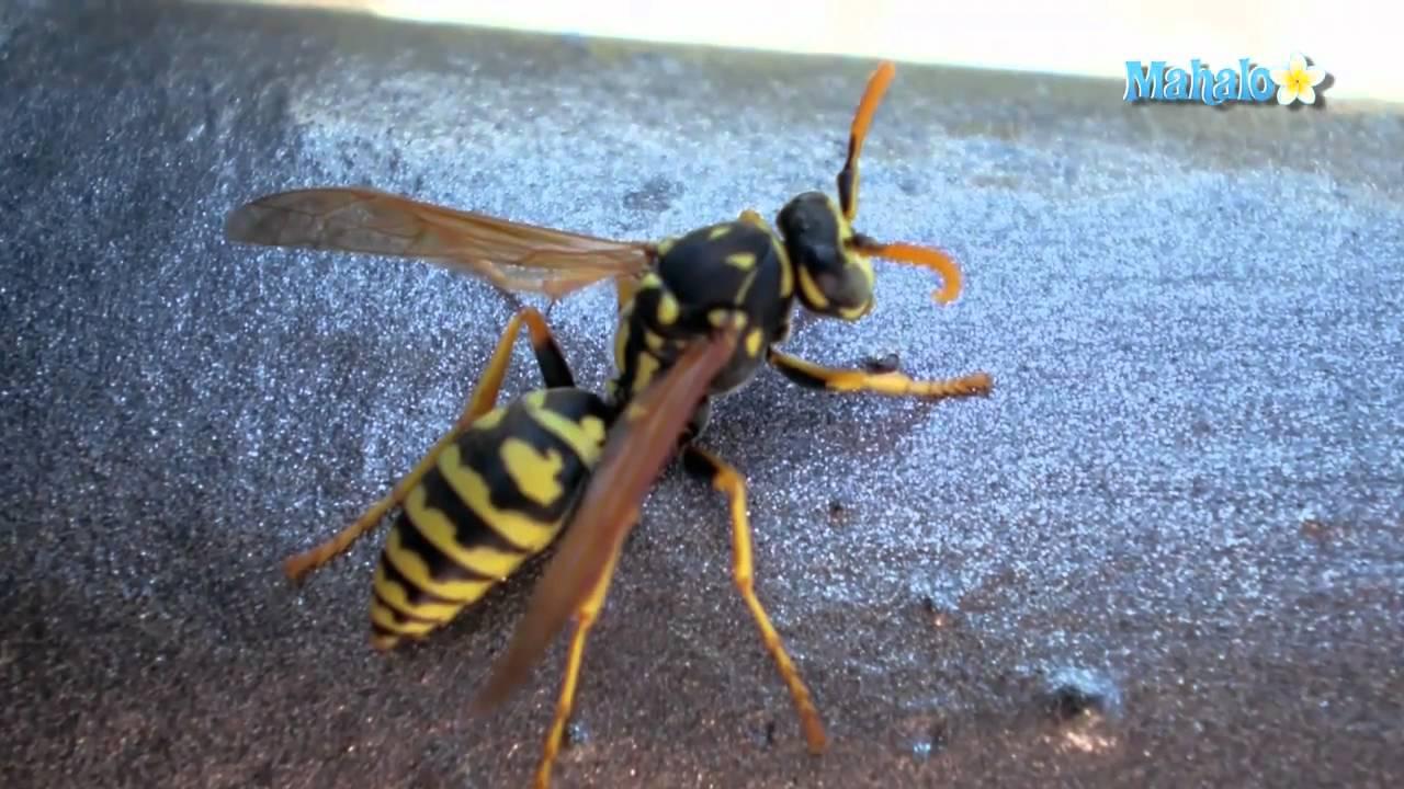 How to Kill Wasps