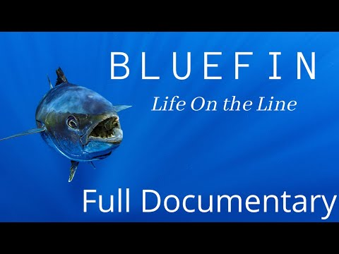 Life On The Line  - The Amazing True Story Of The Southern Bluefin Tuna