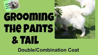 Grooming The Pants And Tail - Quick Tips For Combination Coats
