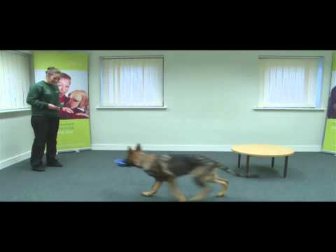 Wag n Train Video - Dogs for the Disabled